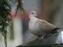 Bos en tuin vogels